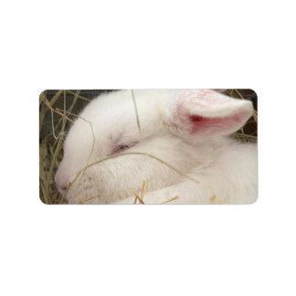 White albino netherland dwarf rabbit head personalized address label