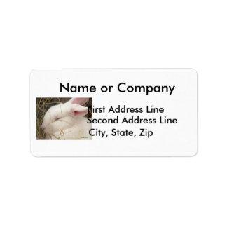 White albino netherland dwarf rabbit head address label