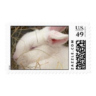 White albino netherland dwarf rabbit head postage stamp