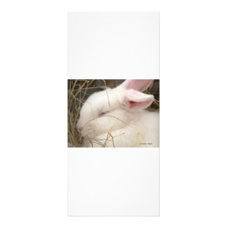 White albino netherland dwarf rabbit head rack card
