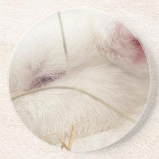 White albino netherland dwarf rabbit head sandstone coaster