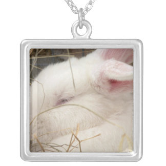 White albino netherland dwarf rabbit head square pendant necklace