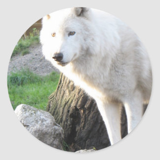 White albino wolf spirit - Therian gifts Classic Round Sticker