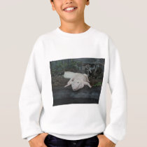 white alligator sweatshirt