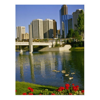 White Along the Bow River, Canada flowers Postcard