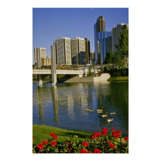 White Along the Bow River, Canada flowers Poster