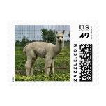White Alpaca Cria Stamp