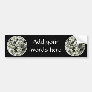 White Alyssum Bumper Sticker