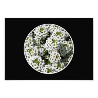 White Alyssum Card