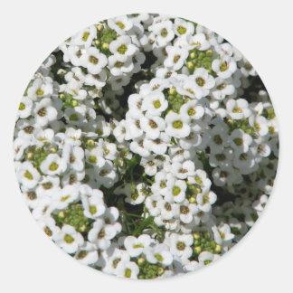 White Alyssum Classic Round Sticker