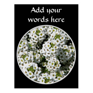 White Alyssum Postcard