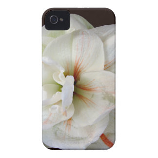 White Amaryllis iPhone 4 Case-Mate Case