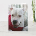 White American Bulldog Photo Card