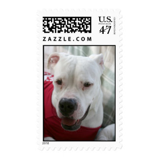 White American Bulldog Photo Postage