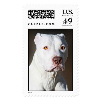 White American Pit Bull Terrier Dog Postage Stamps