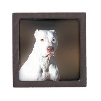 White American Pitbull Terrier Rescue Dog Gift Box