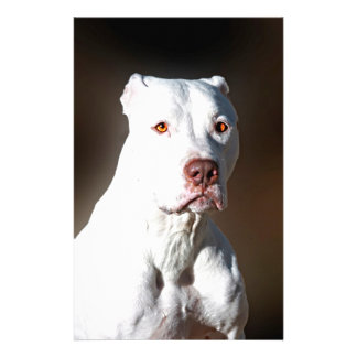 White American Pitbull Terrier Rescue Dog Stationery Paper