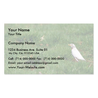 White American robin Business Card