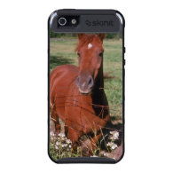 white American saddlebred flowers iPhone 5 Covers