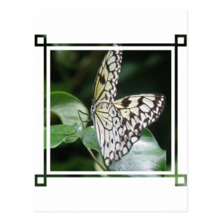 White and Black Butterfly Postcard
