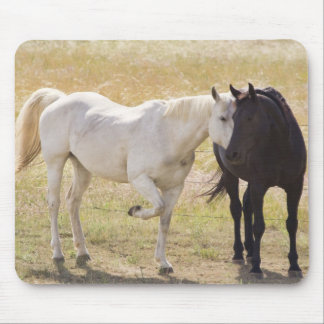 White And Black Horses: My One And Only Mousepad