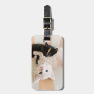 White And Black Kitten Lying On Sofa Bag Tag