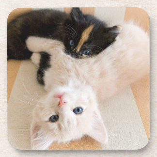 White And Black Kitten Lying On Sofa Drink Coaster