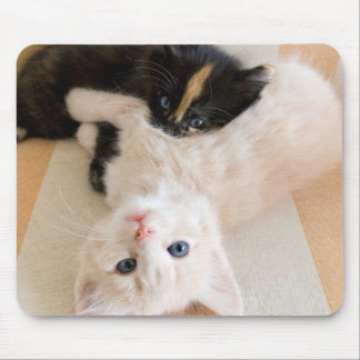 White And Black Kitten Lying On Sofa Mouse Pad