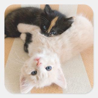 White And Black Kitten Lying On Sofa Square Sticker