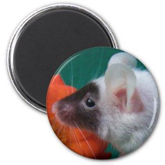 White and Black mouse Orange Tea Rose magnet