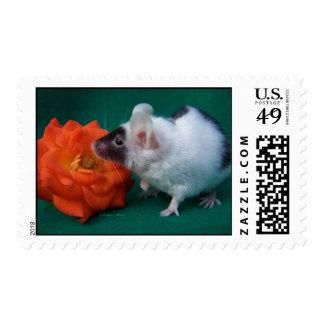 White and Black mouse Orange Tea Rose Postage Stamp