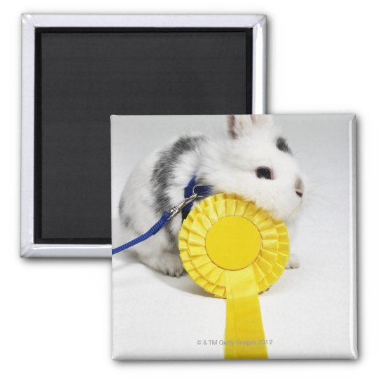 White and black rabbit on blue leash with yellow 2 inch square magnet
