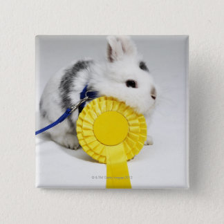 White and black rabbit on blue leash with yellow button