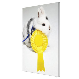 White and black rabbit on blue leash with yellow canvas print