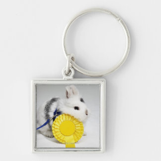 White and black rabbit on blue leash with yellow key chain