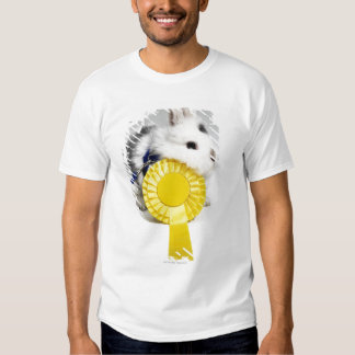 White and black rabbit on blue leash with yellow shirt