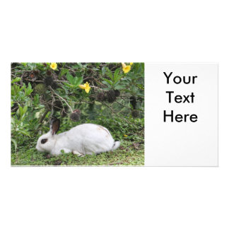 White and Black Rabbit Picture Card