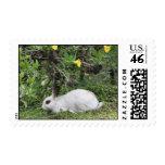 White and Black Rabbit Postage