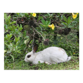 White and Black Rabbit Post Card