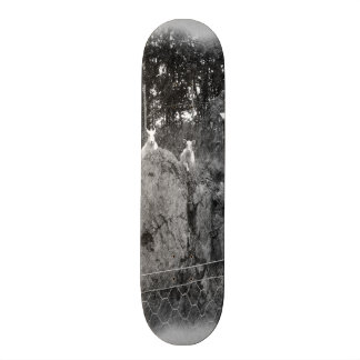 White and black sheep drawing skate boards