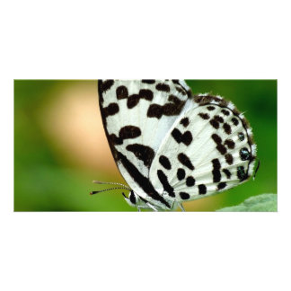 White and Black Spotted Pierrot Butterfly Card