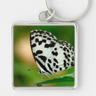 White and Black Spotted Pierrot Butterfly Key Chains