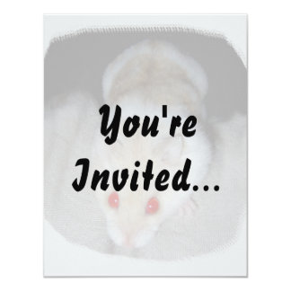 White and blonde albino hamster picture card