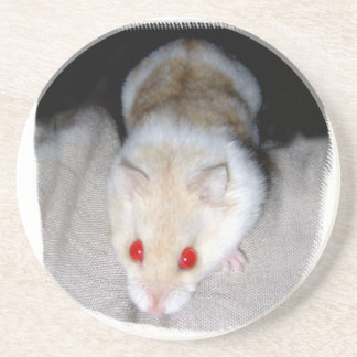 White and blonde albino hamster picture sandstone coaster