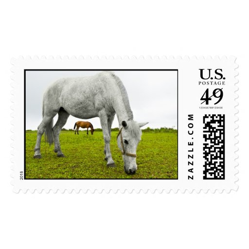 White and Brown Horse Postage Stamps