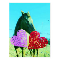 White and Brown horse Valentine Heart Postcard