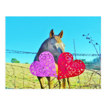 White and Brown horse Valentine Hearts Postcard