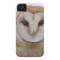 White and Brown Owl iPhone 4 Cover