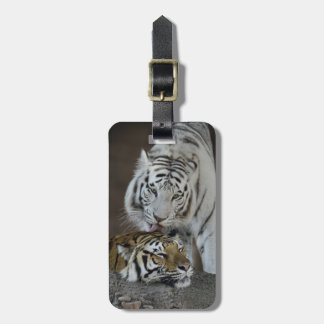 White And Brown Tigers Resting Bag Tag
