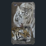 "White And Brown Tigers Resting iPod Touch Cover<br><div class=""desc"">White And Brown Tigers Resting &#169; and &#174; Bigstock&#174; - All Rights Reserved.</div>"